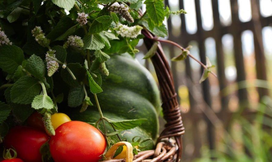Quel légume manger pour maigrir ?